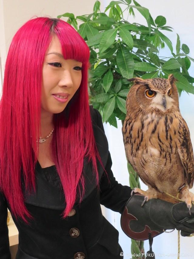 fn183 owl cafe 175