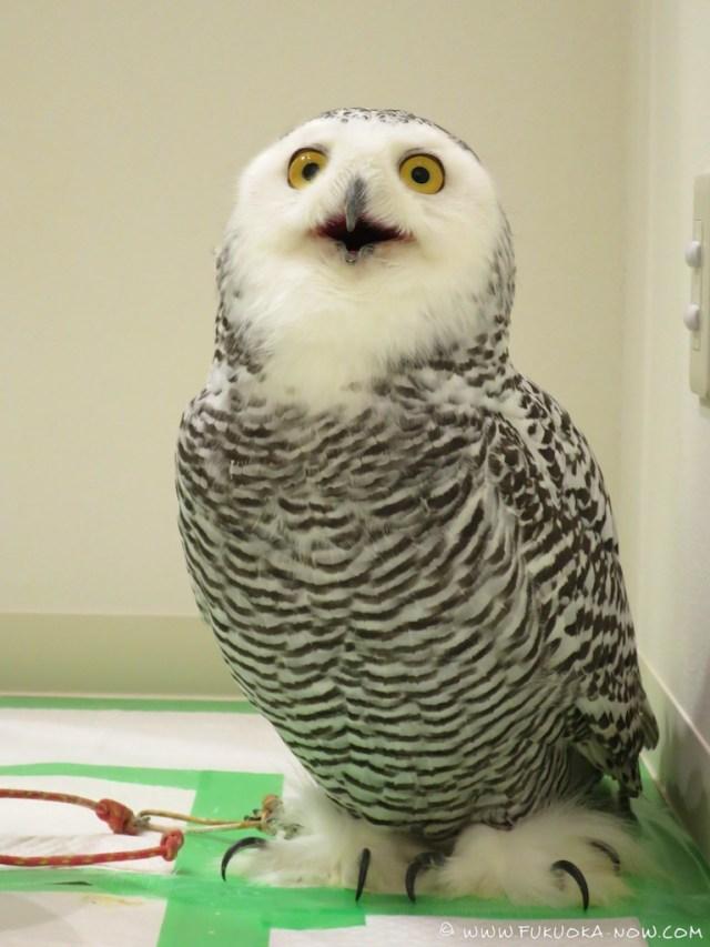 fn183 owl cafe 233