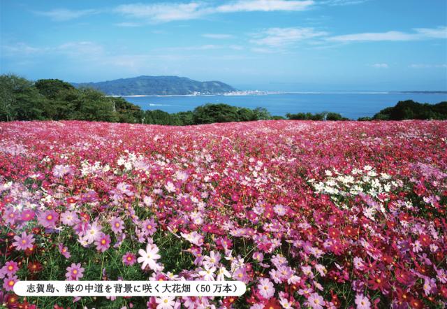 Nokonoshima Cosmos