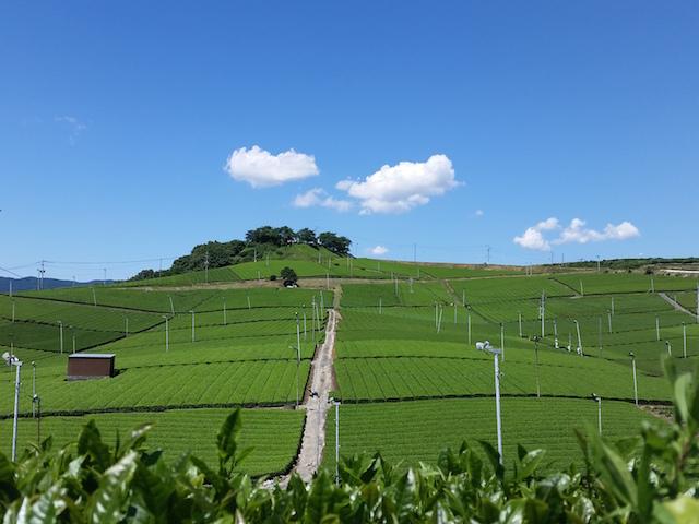 yame field