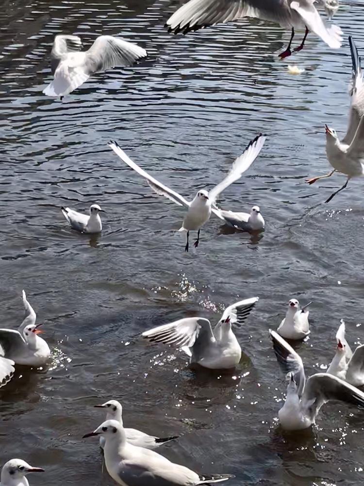 上野公園不忍池