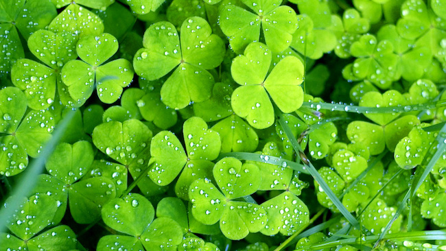 Lesson of the Week: St. Patrick's Day and Ireland Trivia