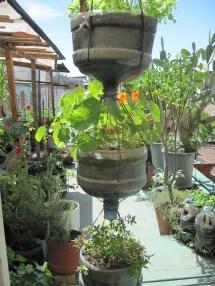 Plastic Bottle Garden Plants
