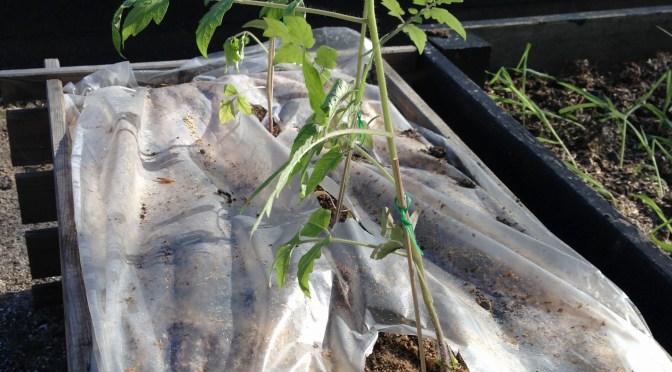 DIY – hjemmelavede plantesække