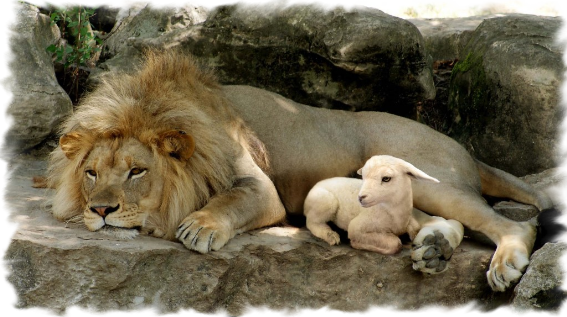 Lion-And-Lamb-Picture-HD-Wallpaper-1024x574