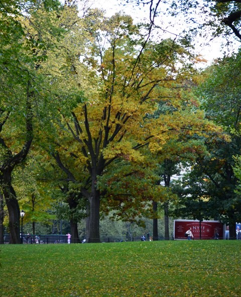 Central Park Fall Photography