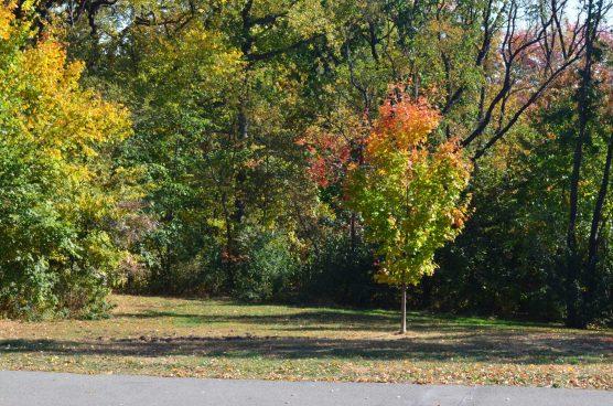 Central Park Fall 2013 8