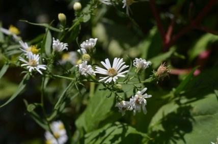 White Flowers in Riverside Park