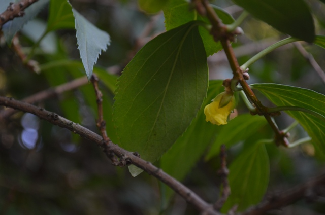 Yellow Flower in Riverside Park