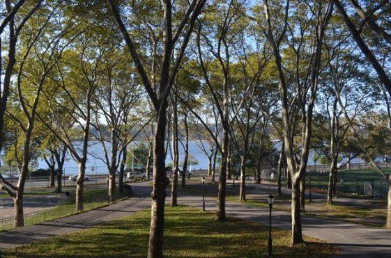 Hudson River Through Riverside Park