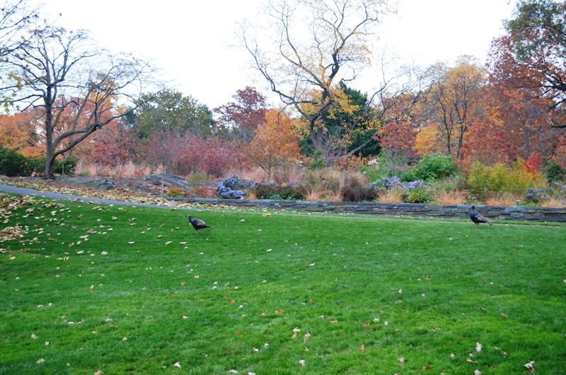 Bronx Botanical Garden 2