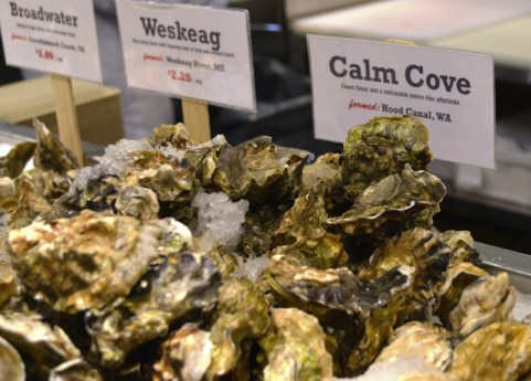 Oyster Varities