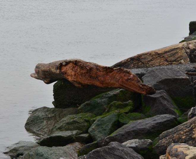 Drift Wood II in Riverside Park