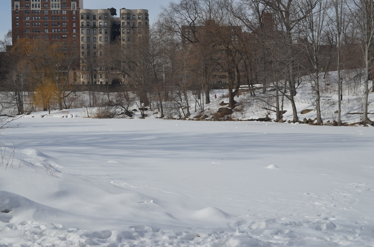 The Pool in Central Park