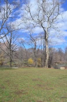 Spring 2014 in Central Park