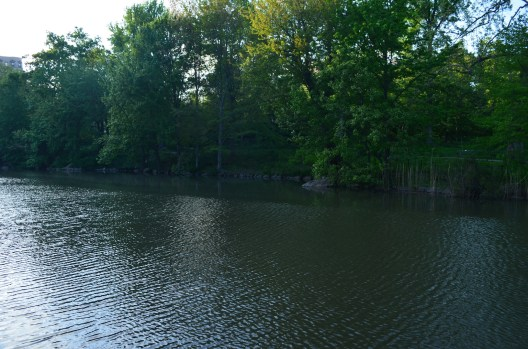 The Pool Pond in Central Park
