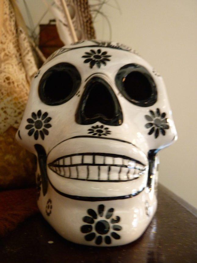 Morbid Anatomy Museum - Skull