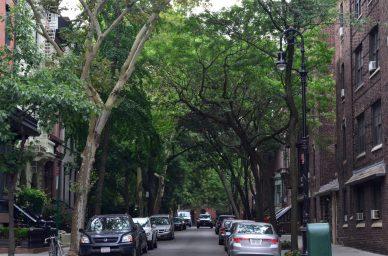 Tree Lined Street In Brooklyn Heights