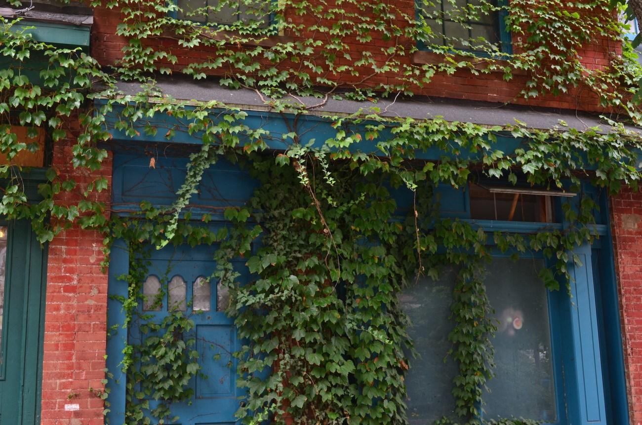 Vines In Vinegar Hill Brooklyn