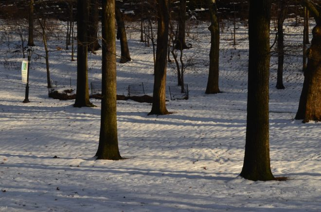 Winter Evening in Riverside Park