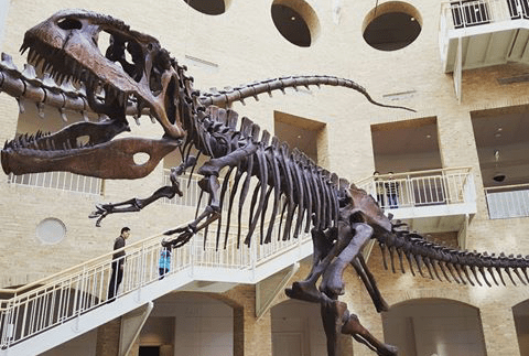 Fernbank Museum of Natural History - Image by Thomas Gregory via Instagram