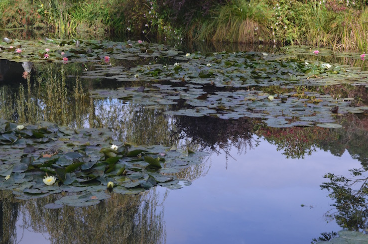 Lillypads at Claude Monet Garden