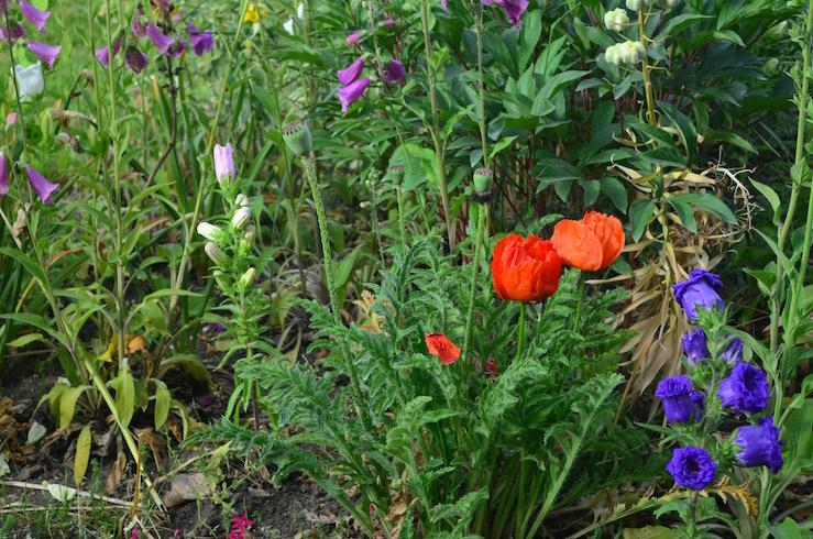 Summer Flowers in Paris