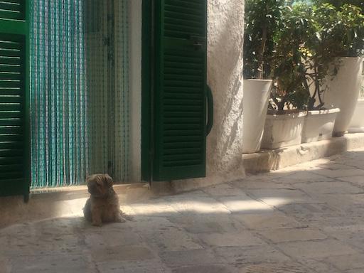Italian Dog