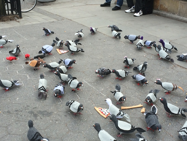New York City Pigeons