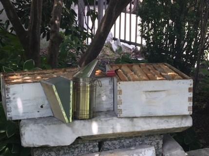 Harvesting Honey in New York City