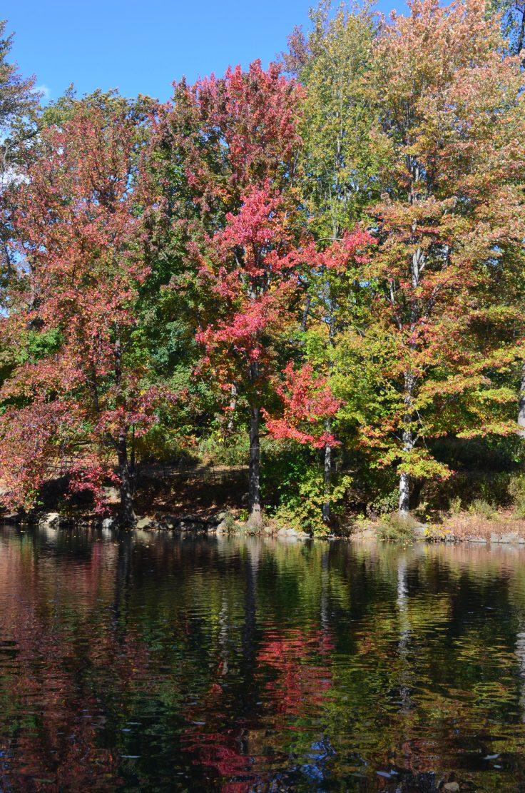 Central Park Fall 2013 1