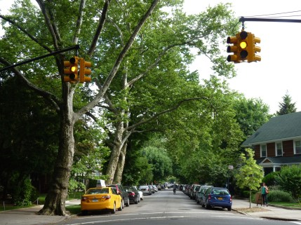 Tree Lined Streets 3