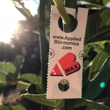 AppliedBio-nomics.com parasite for whitefly