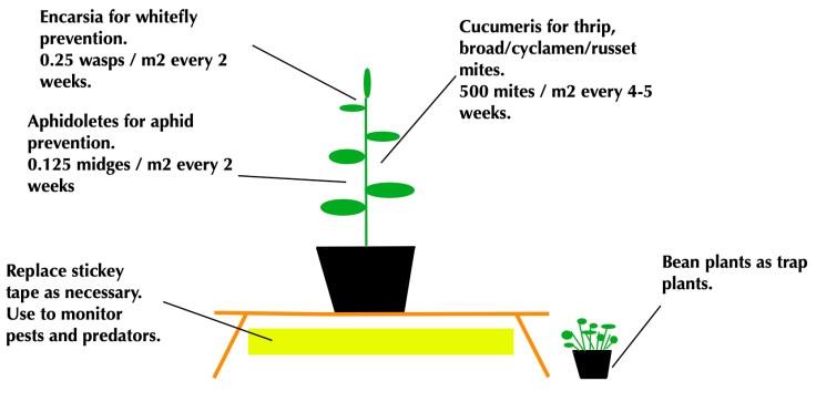 medium plant on bench jpeg