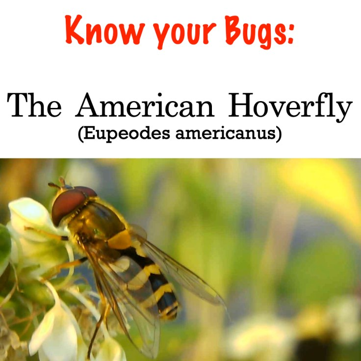 Hoverfly title