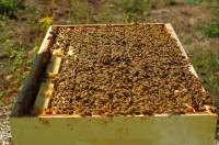 a vibrant hive