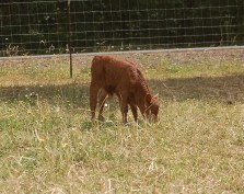 George- checking out the pasture