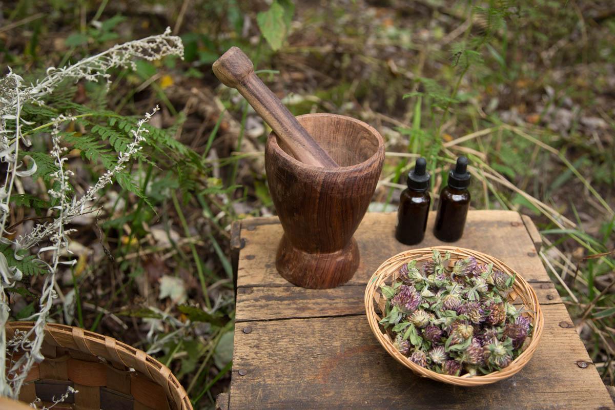 Learning Herbalism Workbook Member Site