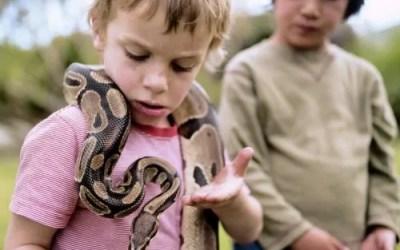 Is a reptile right for your family?