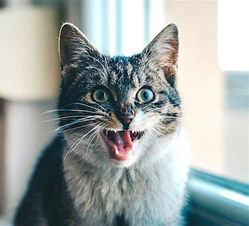 https://pixabay.com/en/cat-animal-pet-kitten-domestic-1986499/