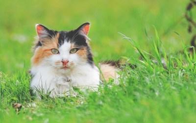 Feline Friday!