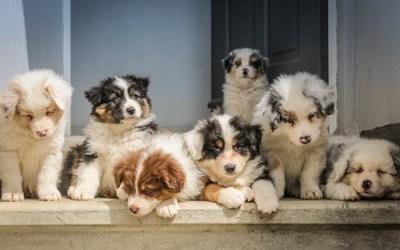 Is Pet Insurance Worth It? Part 2