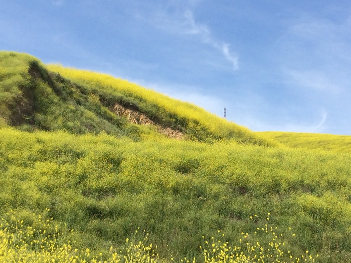 "Brea Hills Wildflower ""Super Bloom"""