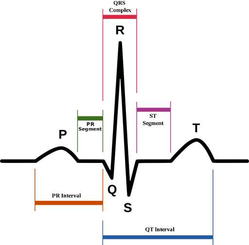 ECG Full Form — What is the full form of ECG?