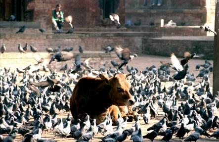 kathmandu**durbar square