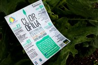 clorofilla locandina