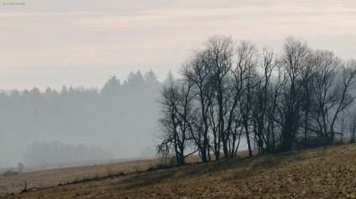 Trees, Germany