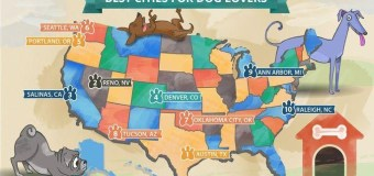 The Best Cities for Dogs & Dog Lovers
