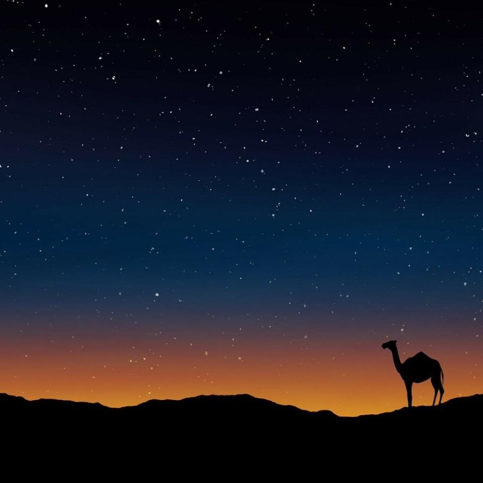 Camel at sunset. Public domain photo.