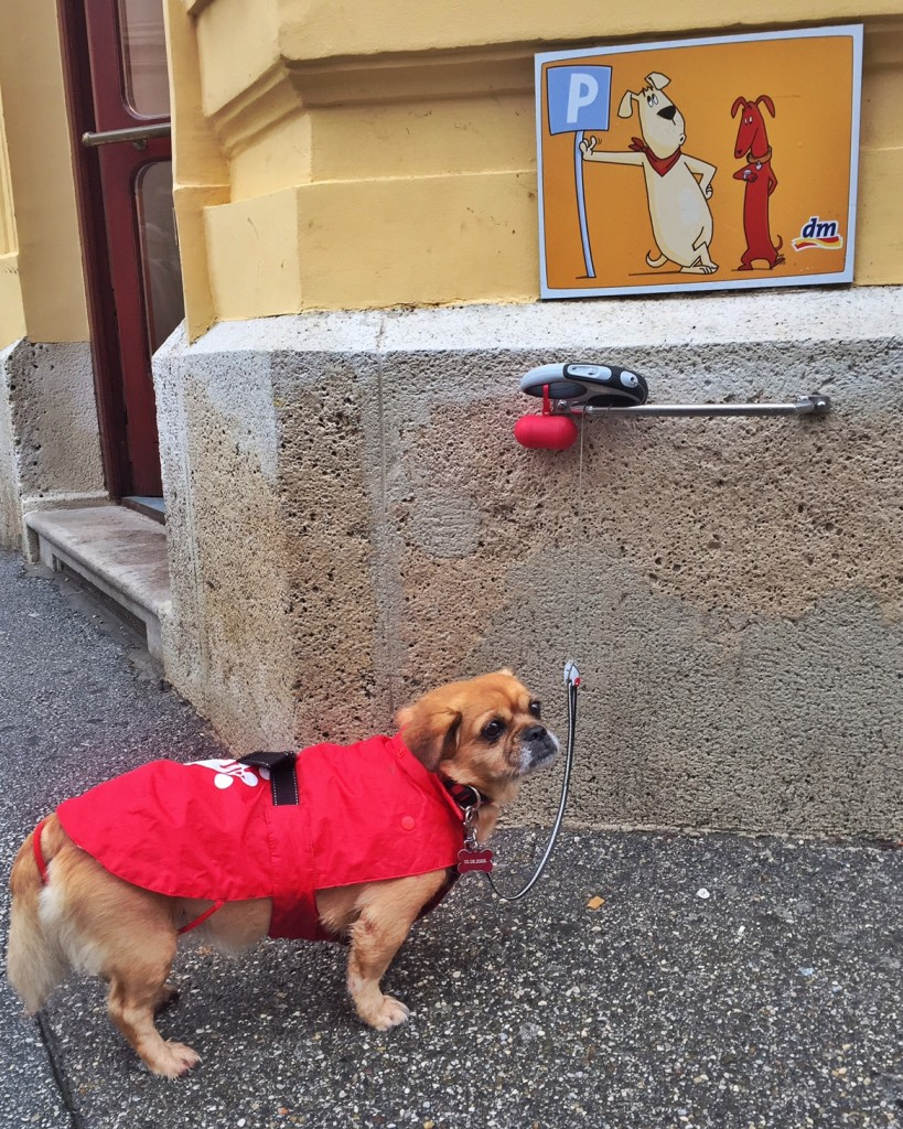 """Sometimes you just gotta hang out and chill, like this little doggy in Zagreb's adorable """"doggy parking spots""""."""